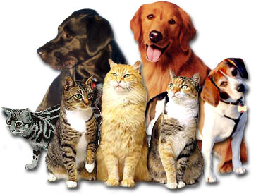 Dog Herding Cats Video